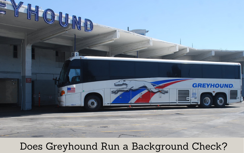 does greyhound run a background check